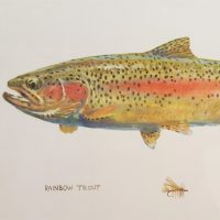 Rainbow Trout (Left)